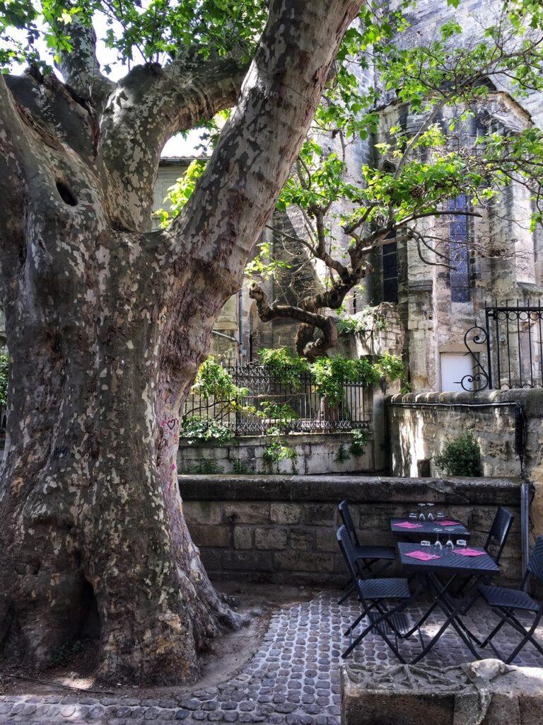 Ein Foto aus Avignon. Unter einem riesigen, knorrigen und uralten Baum stehen zwei kleine schwarze Tische mit Stühlen eines Restaurants an einer niedrigen alten Steinmauer. Auf den Tischen stehen Gläser auf pinkfarbenen Servietten bereit. Im Hintergrund sieht man Teile einer alten Kirche und grün berankte schmiedeeiserne Gitter.