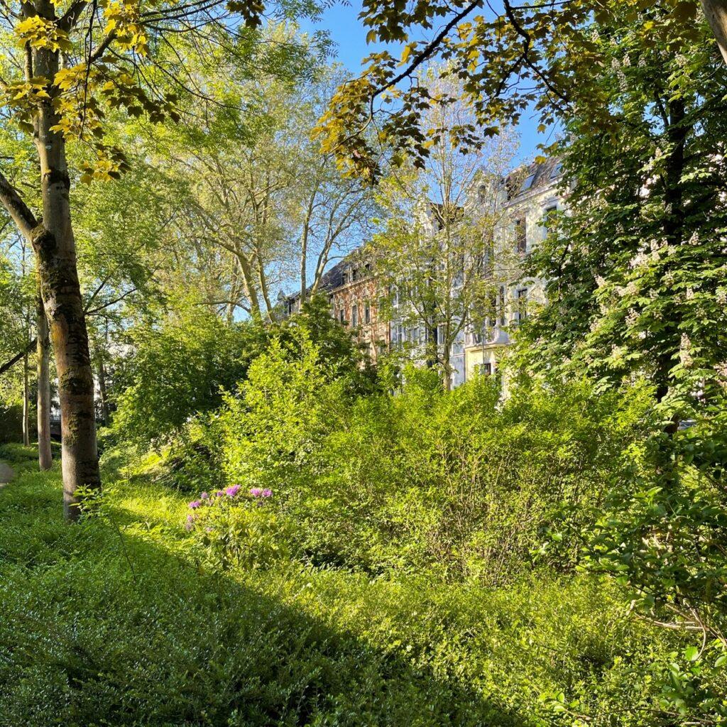 Blick auf alte Neusser Stadtvillen, die hinter blühenden Büschen und Bäumen versteckt stehen. Die Morgensonne im Mai wirft Schatten.